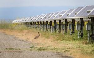 solar wildlife