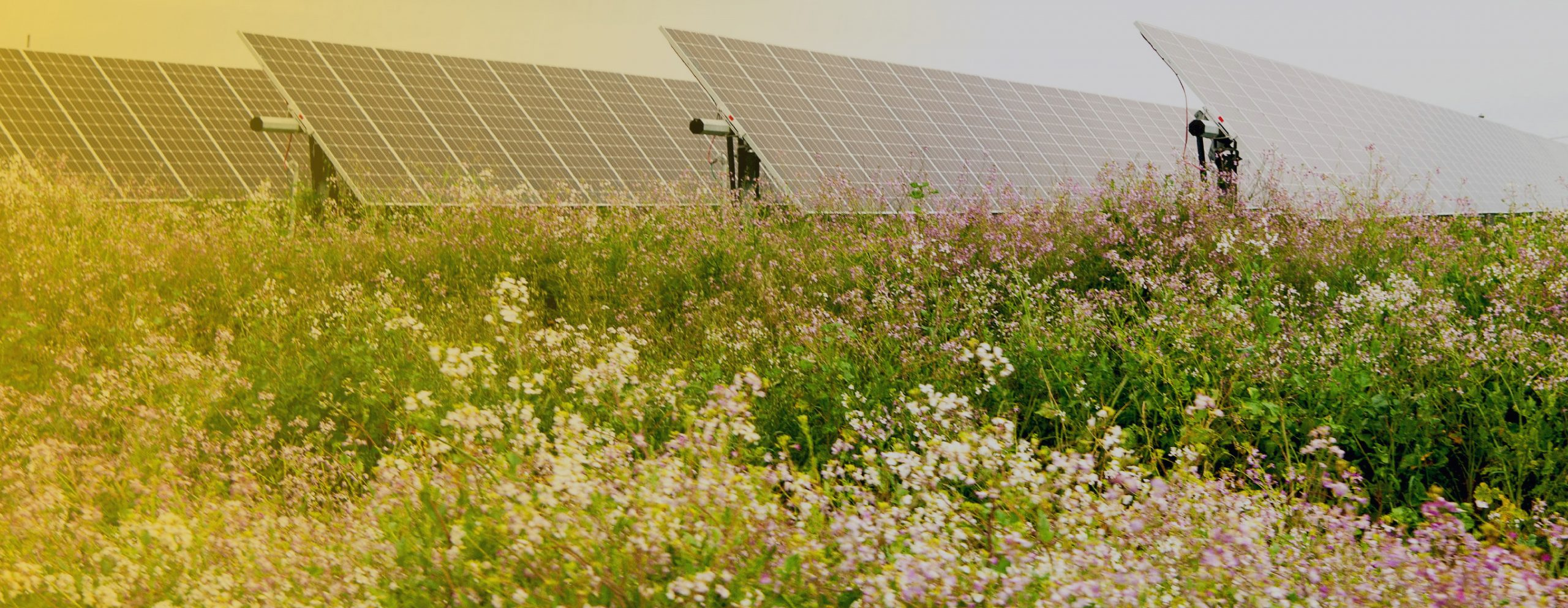 SOLAR POWER + AGRICULTURE: The Practices and Synergies of Agrivoltaics